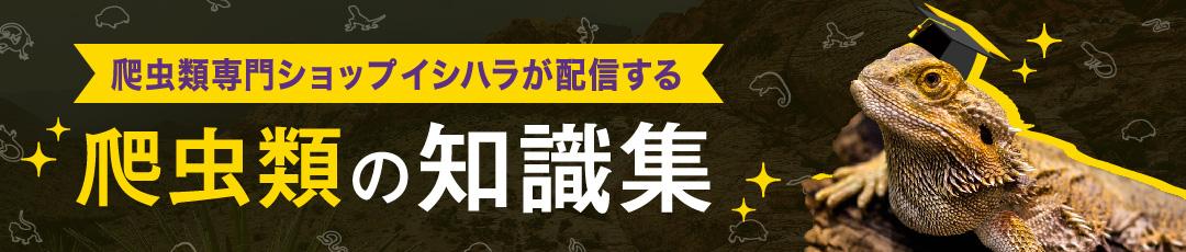 菅原金物店の知識集